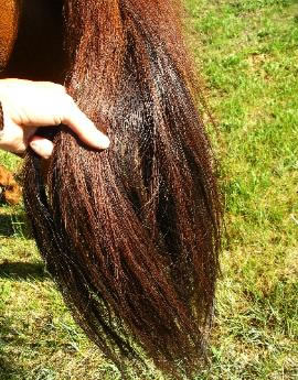 Collecting Horsehair